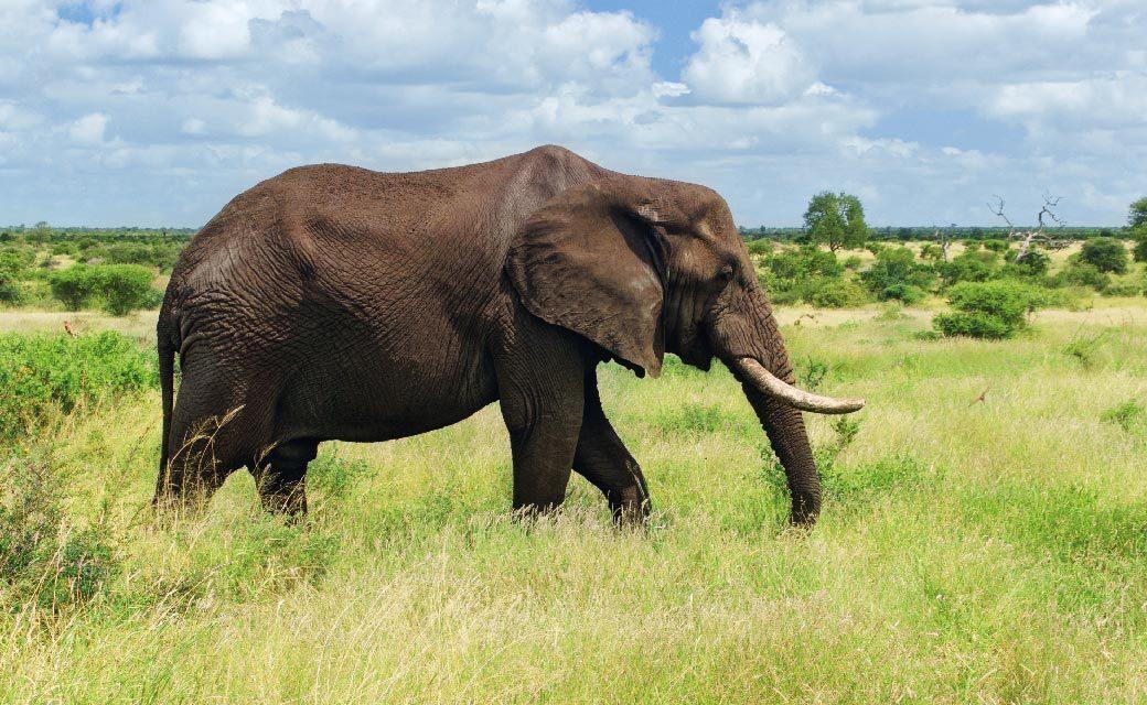 https://spiritjourneysworldwide.com/wp-content/uploads/2020/07/Elephant-03-1040x640.jpg